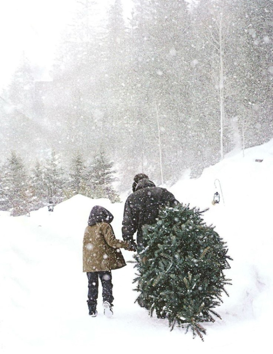 Finding the perfect Christmas tree